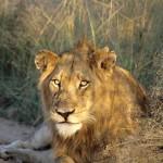 SudAfrica park