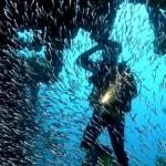 Diving Tortola