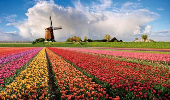 Tipica veduta dei Paesi Bassi