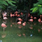Ardasta Gardens- Flamingo rosa