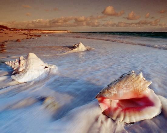 spiagge bianche di Salalah
