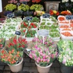 Amsterdam mercato dei fiori