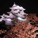 Night view of cherry blossoms at Himeji castle