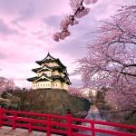 fioritura primavera giappone