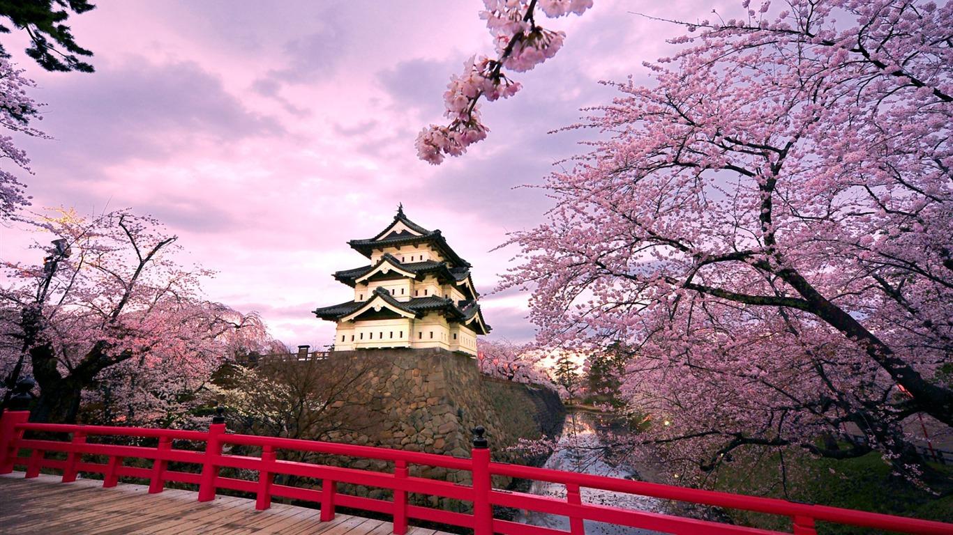 Viaggio in Giappone per la fioritura dei ciliegi