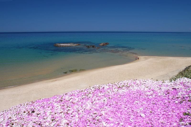 spiaggia ampurias sardegna