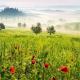 Aprile NON è dolce dormire: alla ricerca di sagre in Italia